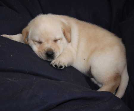 lille nuttet hund